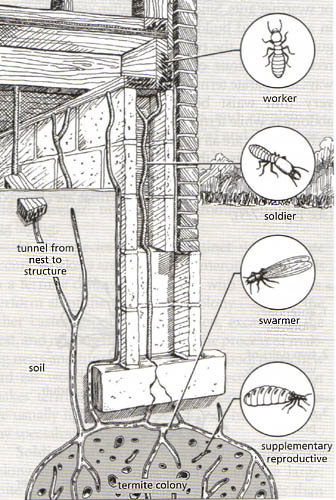 Termite-Infestation-graphic